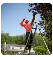 Autumn-SavATree; Chicagoland Tree Care